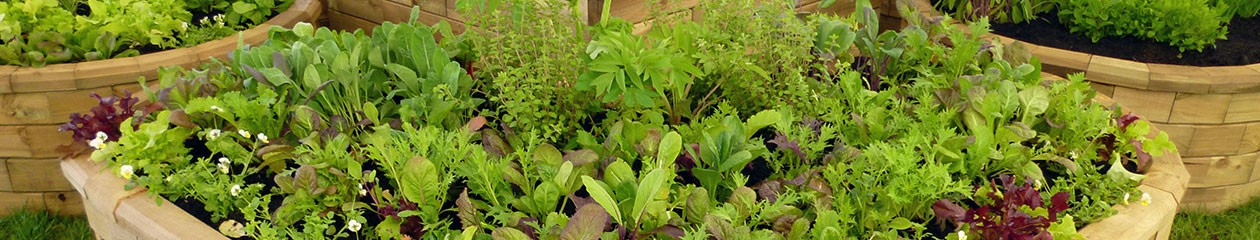 Peat Free Plants